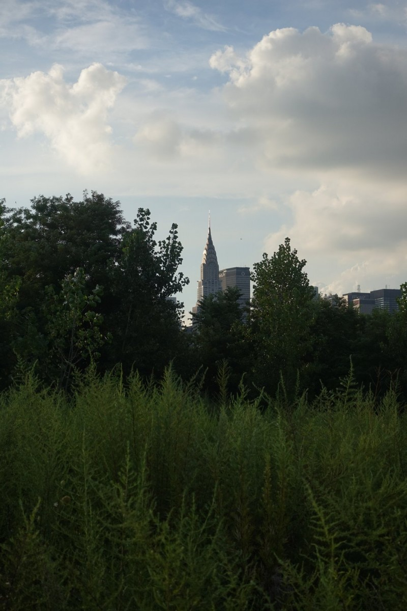 Love this shot of the Chrysler Building peeking through the weeds.